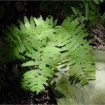 Fern bathed in sunlight in the middle of the woods