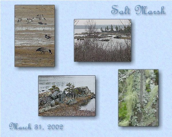 Salt Marsh, Cole Harbour, NS