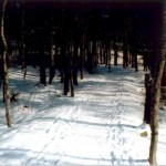 Path through the woods on the East side of the lake