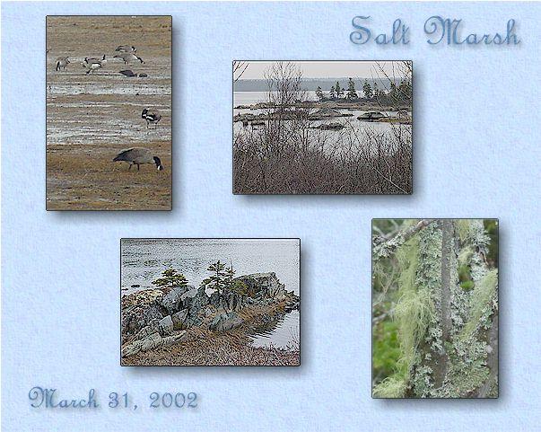 Salt Marsh, Cole Harbour, NS