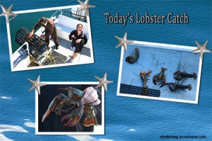whale watching the lobster catch