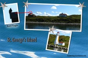 whale watching St. George's island