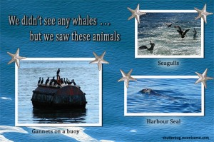 whale watching the sea life